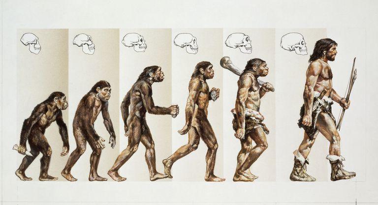 """gotowa lekcja: what makes us humans?, czyli """"skąd wzięli się ludzie?"""" po ludzku"""